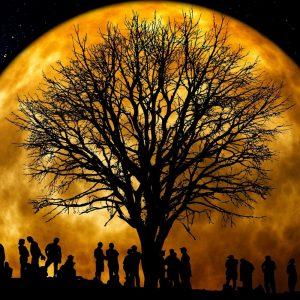 tree-66465_1920_web